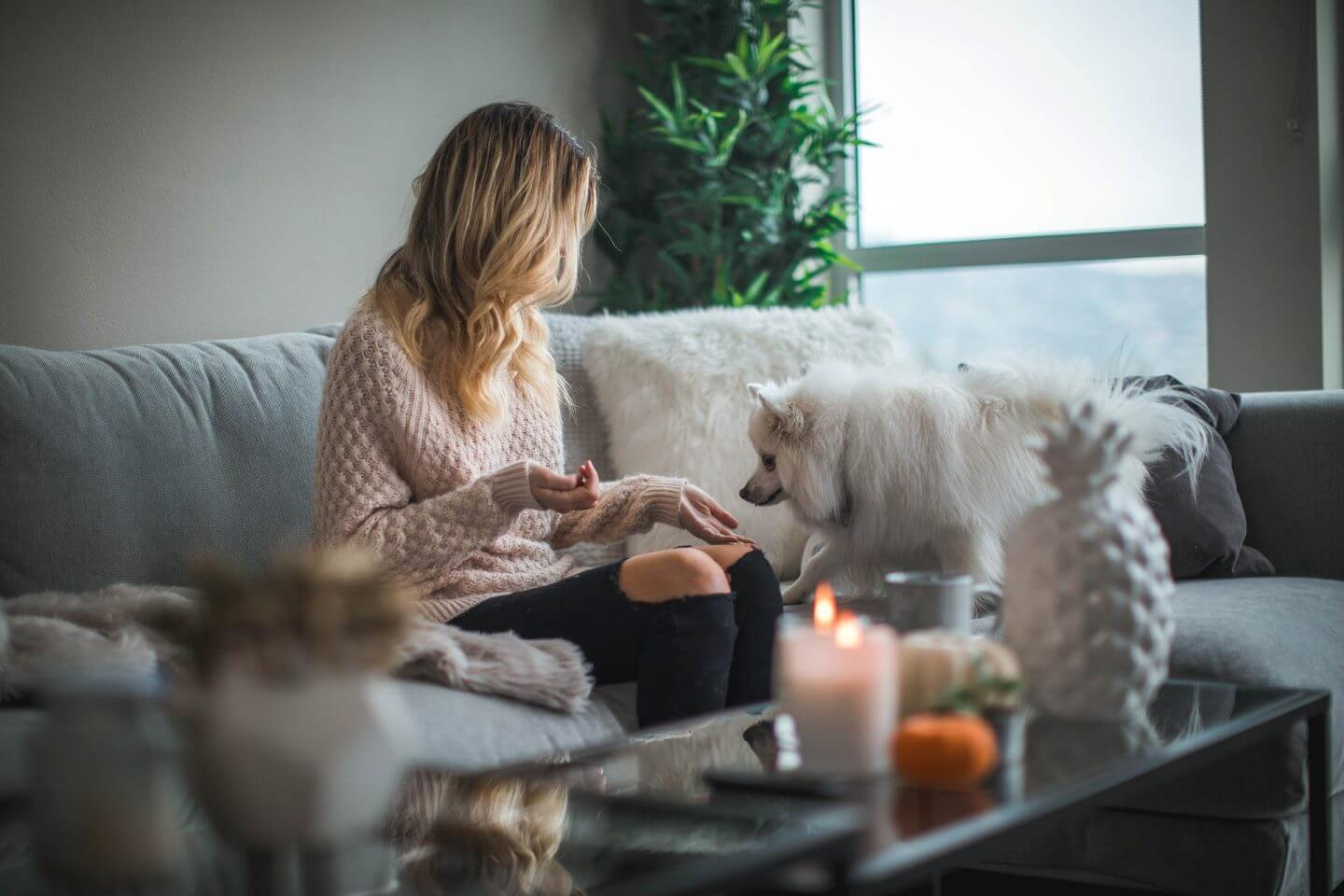 A young woman sits on a white couch with feeding a white dog a treat with candles in the foreground  Why Do People Hire a House Sitter?   bucketlistmylife.com