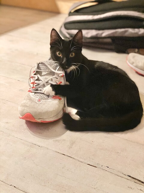 Cute black kitten with white paws lies cuddling a red and white trainer | House Sitting in Devon | bucketlistmylife.com