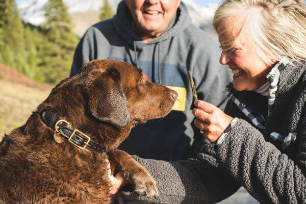 A grey haired women and man are smiling at a brown dog they are playing with | Is House Sitting Safe and Other FAQs | bucketlistmylife.com